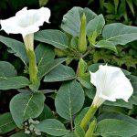 Отравления растениями