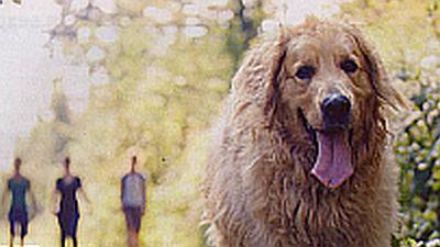 Собака и лето